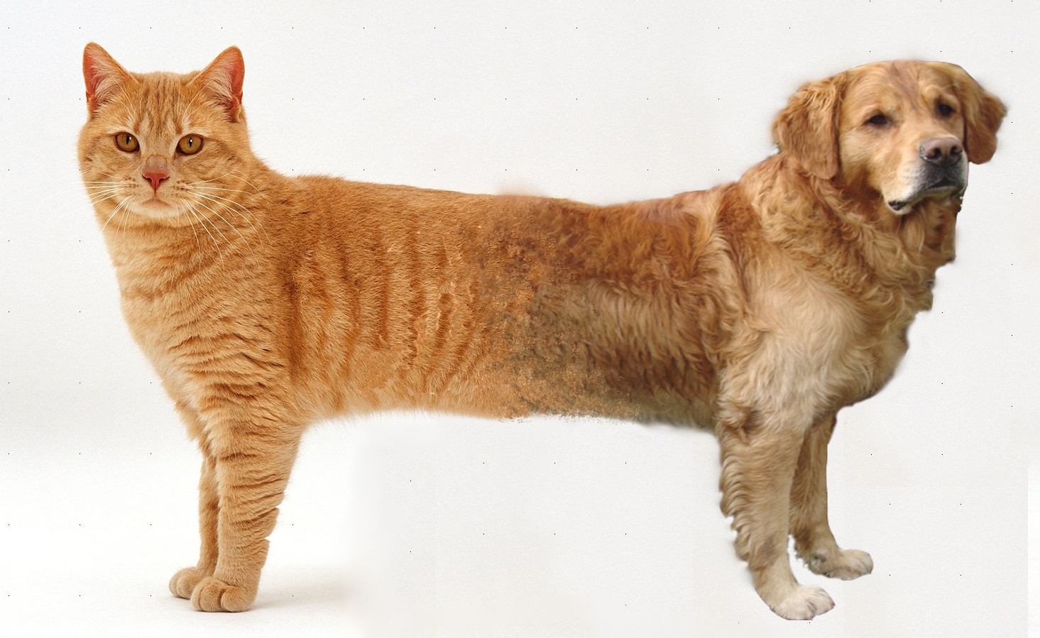 cat dog Different dog breeds have different lifespans in general, smaller dogs live longer than bigger ones the size and the breed of the dog change how long the dog.